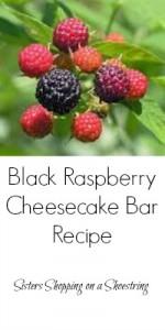 Black Raspberry Cheesecake Bar Recipe